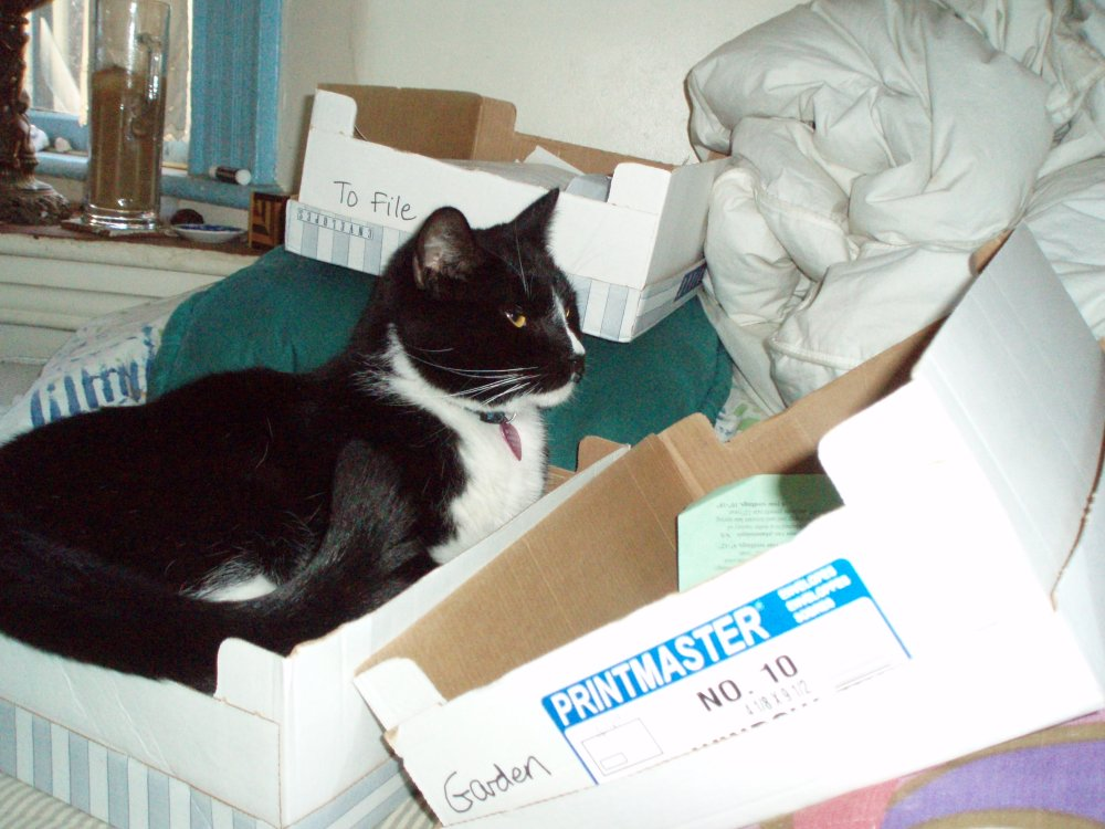 kittyboxes-M.jpg